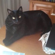 Necesitas la mesa? Lo siento ahora la estoy usando yo de cama.  #gatonegro #gato #sora #gatanegra #blackcat #cat #catsofinstagram #lovelycat #gatosdeinstagram #gatosdelmundo #pelusa #pelusanegra #amordegato #catslove #catslover #catstagram #catexperience #gatovago #catoftheday #crazycatlady #caturdays365