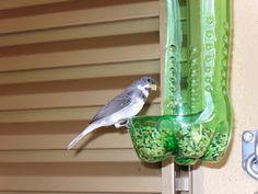 Alimentador de pássaros com garrafa pet - Passo a passo - Instituto Ecoação Mais