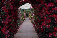 Rose Garden Wallpaper Background