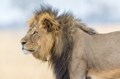 Conservationists Warn Endangered Species Will Vanish Forever Unless We Act Now