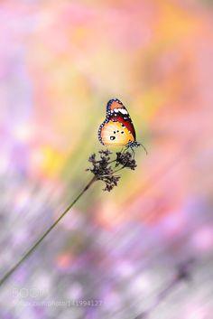 pulse by yilmazuslu #nature #photooftheday #amazing #picoftheday