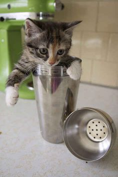 And this kitty who just wants to help out in the kitchen!