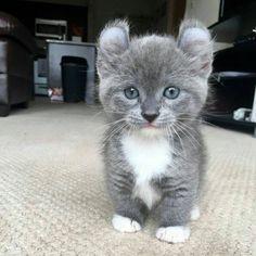 Such a cute kitty!