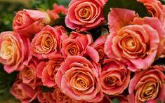 Orange roses, close up, decorations, flowers