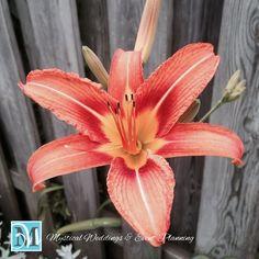 Beautiful flower from the garden…