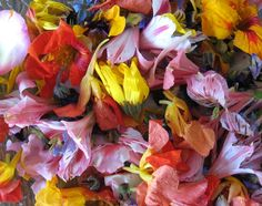Edible Flowers Part 6 - Burnet, Magnolia, Fennel, Garden Sorrel, Tansy, Pink Wood Sorrel, Sunflower, Pineapple Guava, Prickly Pear, Pansies