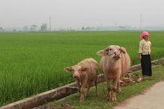Il vero Vietnam visto da vicino