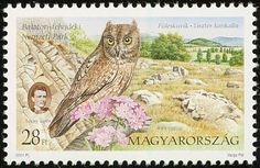 Eurasian Scops Owl stamps - mainly images - gallery format