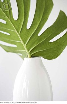 Want to keep plants simple. Tropical Leaf in White Vase