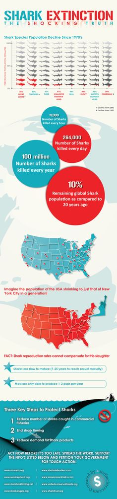 Ocean lovers everywhere, we are at crisis point. The top predator species in the food chain of our oceans is being hunted to extinction. Some shark specie populations are estimated to have declined by over 99% since the 1970′s! This great chart shows the shocking truth of shark population declines since the 1970s.