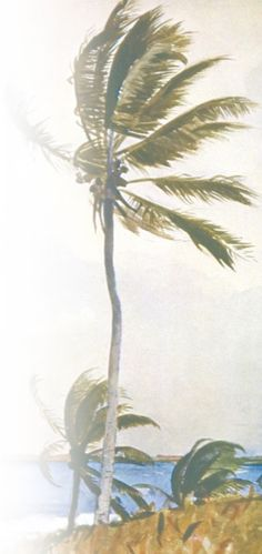 Cenário praiano típico do litoral nordestino. Galhos e folhas se deixam levar pelo vento.