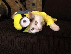 Minions Are Taking Over The World In Really Weird Ways | So Bad So ...