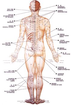 Acupuncture points, back
