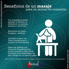 Los beneficios de los masajes para los perros #masajes #perros #mascotas #canes…