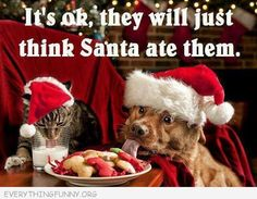 Do you make your own dog treats? How to make 5 quick & healthy dog treats at home. Full ingredients lists and short recipes to make these treats. Funny Christmas Pictures, Christmas Jokes, Christmas Animals, Christmas Cats, Merry Christmas, Christmas Time, Christmas Photos, Christmas Shopping, Christmas Captions