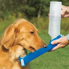 Supplies your dog with fresh water anywhere you travel