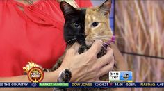 Viral sensation Venus the two-toned cat still going strong