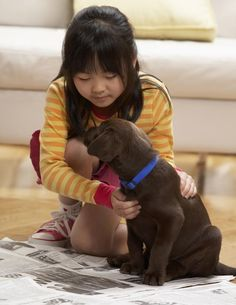7 How-To Steps to Clicker Training Puppies: Children can easily learn to clicker train puppies.