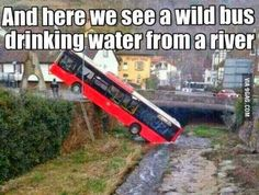 A Wild bus. / well the bus company boss was certainly WILDly furious with this employee bus driver / lucky was an empty bus on route to the depot / that's why driver ended up here / took a short cut / now unemployed so needs to win the national WATERY !!!! ✅