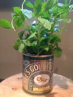 Lyles Golden Syrup Tin. Fresh mint container. Tin Can Alley, My Ideal Home, Golden Syrup, Fresh Mint, Tins, Home Projects, Indoor Plants, Planter Pots, Dining Room