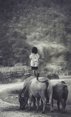 Oi! remembering times when i've watched our cattle as a little girl... :) Vietnam by David Terrazas