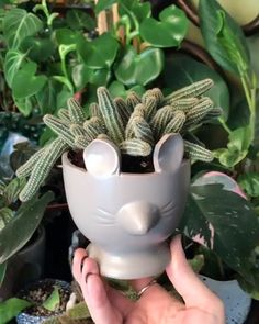 How cute is the peanut cactus? - For how-to's, tips and tricks, and inspiration on all things succulents… check out our website - Succulent Gardening, Succulent Care, Cacti And Succulents, Planting Succulents, Propagate Succulents, Gardening Tips, Outdoor Garden Statues, Cactus Plante, Tips And Tricks