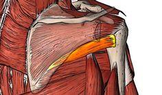小円筋の触察 | anatomy tokyo