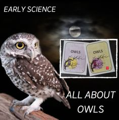 1st Grade Science, Mad Science, Science Lesson Plans, Science Lessons, Internet Scavenger Hunt, Owl Facts, Halloween Worksheets, Halloween Science, Writing Strategies