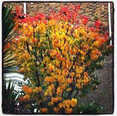 Red orange yellow, Primrose Hill