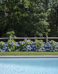 Justine has previously lamented the popularity of hydrangea on her native Cape C. Justine has prev Landscaping Around Pool, Fence Landscaping, Pool Fence, Garden Pool, Farmhouse Landscaping, Luxury Landscaping, Landscaping Company, Plants Around Pool, Green Garden