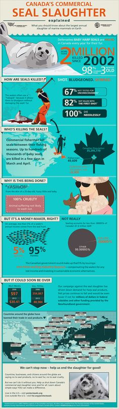 Canada's Commercial Seal Slaughter Explained [Infographic] : Humane Society International