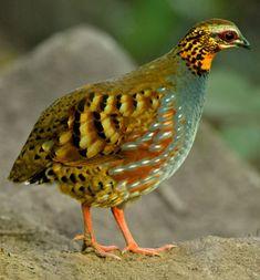 Pin on Birds Most Beautiful Birds, Pretty Birds, Exotic Birds, Colorful Birds, Beautiful Creatures, Animals Beautiful, Animals And Pets, Cute Animals, Kinds Of Birds