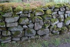 LOVE the moss on the wall