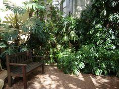 Semana do Meio Ambiente, o incrível jardim da casa do ambientalista josé Lutzenberger, veja no Blog Jardim de Helena
