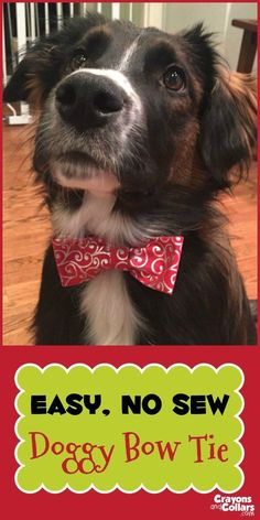 - Dogs - Easy, DIY, No Sew Dog Bow Tie Make this super easy no sew DIY doggy bow tie in less than 10 minutes with stuff you probably have at home. Dog Crafts, Dog Bows, Dog Bow Ties, Tie Bow, Dog Costumes, Diy Stuffed Animals, Training Your Dog, Dog Accessories, Wedding Accessories