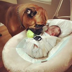 Dog Gives Crying Baby His Favorite Toy To Comfort Him