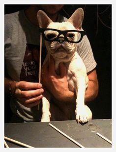 proof that frenchies don't always clown around