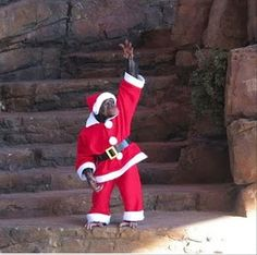Santa Claus Monkey