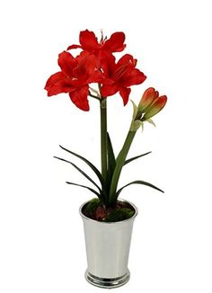 Flame Orange silk Amaryllis plant in silver pot tall). Get Well Soon Flowers, Amaryllis Plant, Silk Flowers, Planting Flowers, Gift Delivery, Orange, Plants, Silver, Gifts