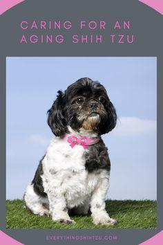 Senior Shih Tzu dog care Shih Tzu Poodle, Shih Tzu Puppy, Small Mixed Breed Dogs, Pekinese, Dog Ages, Dog Quotes Funny, Puppy Names, Rottweiler Dog, Dog Friends