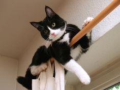 Como Evitar que seu Gato Arranhe a Mobília