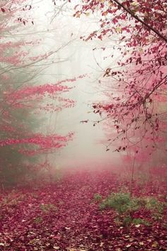 it was so quiet.... Beautiful pink and red leaves covering the forest and the ground #photography #forest #pink