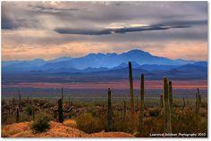 Sonoran Desert Floor from Southwest view at Arizona Sonora Desert Museum, Tucson, Arizona