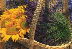 Sunflowers and lavender (Provence, France)