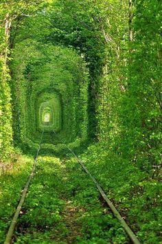 45-Túnel del amor en Ucrania