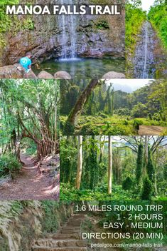 Manoa Falls Trail: Best waterfall hike on Oahu. Short hike. Vacation ideas and list of things to do on Oahu Hawaii, part of perfect 3 day itinerary, 5 day, or 7 day! Outdoor activities on a budget to save money on day trip adventure from Waikiki or Honolulu, near Kailua, North Shore. Free, cheap. Beaches and snorkeling nearby. Bucket list dream destinations, honeymoon. Tips for what to wear hiking and what to pack for Hawaii packing list. Oahu travel guide. #hawaii #oahu