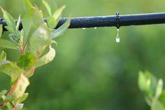 Un sistema de riego por goteo es una manera de mantener regada la huerta cuando no estás, y de ese modo también ahorrar tiempo.