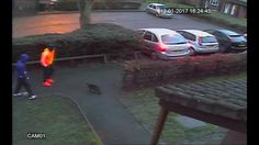 CCTV captures shocking moment passerby kicks cat - ITV News