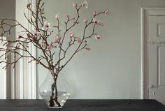 Tulip Magnolias