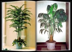 The most fire safe plants available are plants made using inherently fire retardant foliage where the fire retardant chemical is impregnated into the leaves and branches during the injection molding process. For more visit http://www.commercialsilk.com/fire-safe-plants.aspx